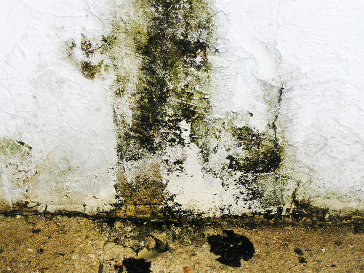 Black mold on a basement wall.
