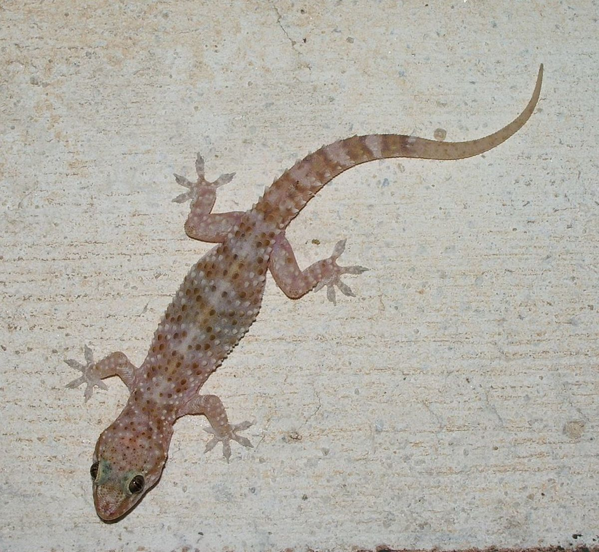 How To Rid Your Home Of Lizards Dengarden