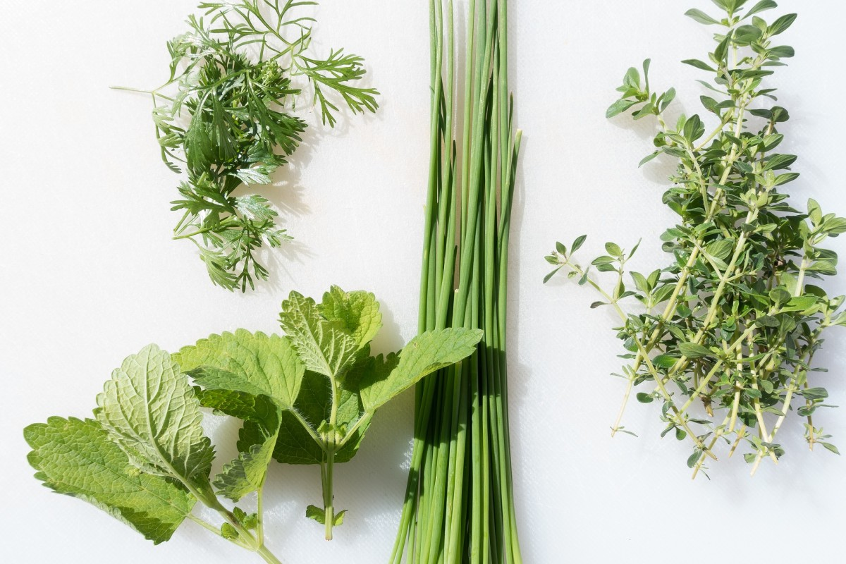 Herbs work wonderfully in savory, spicy, and even sweet drinks!