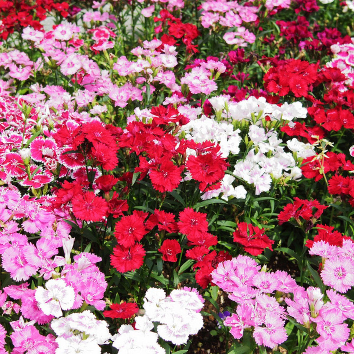 low maintenance plants for sunny areas dengarden