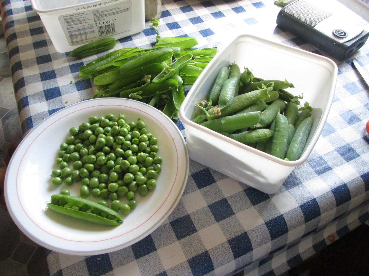 Some of the peas I picked from my garden