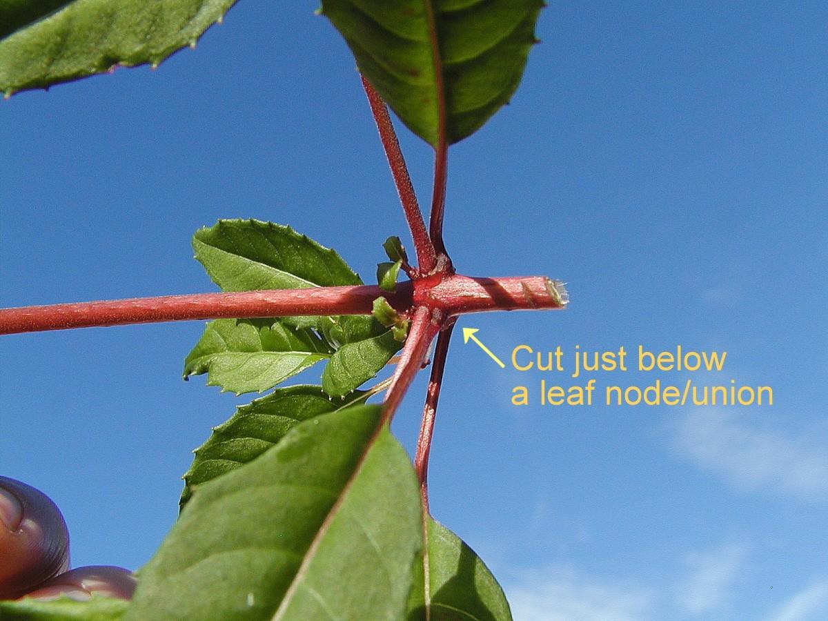 Cut just below a leaf node/union