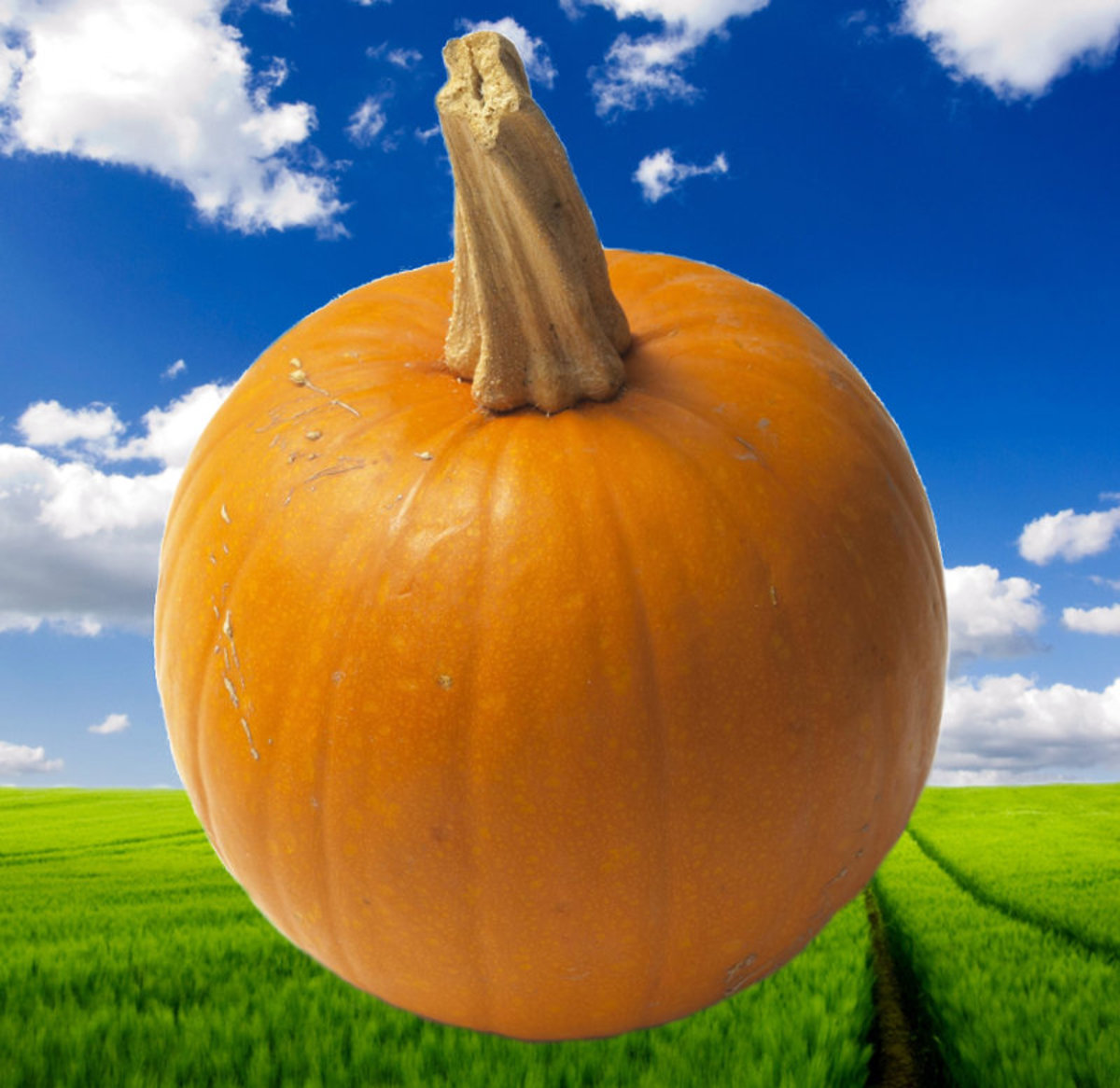 Illustration of pie pumpkin compiled by Robert Kernodle from Creative Commons source images.