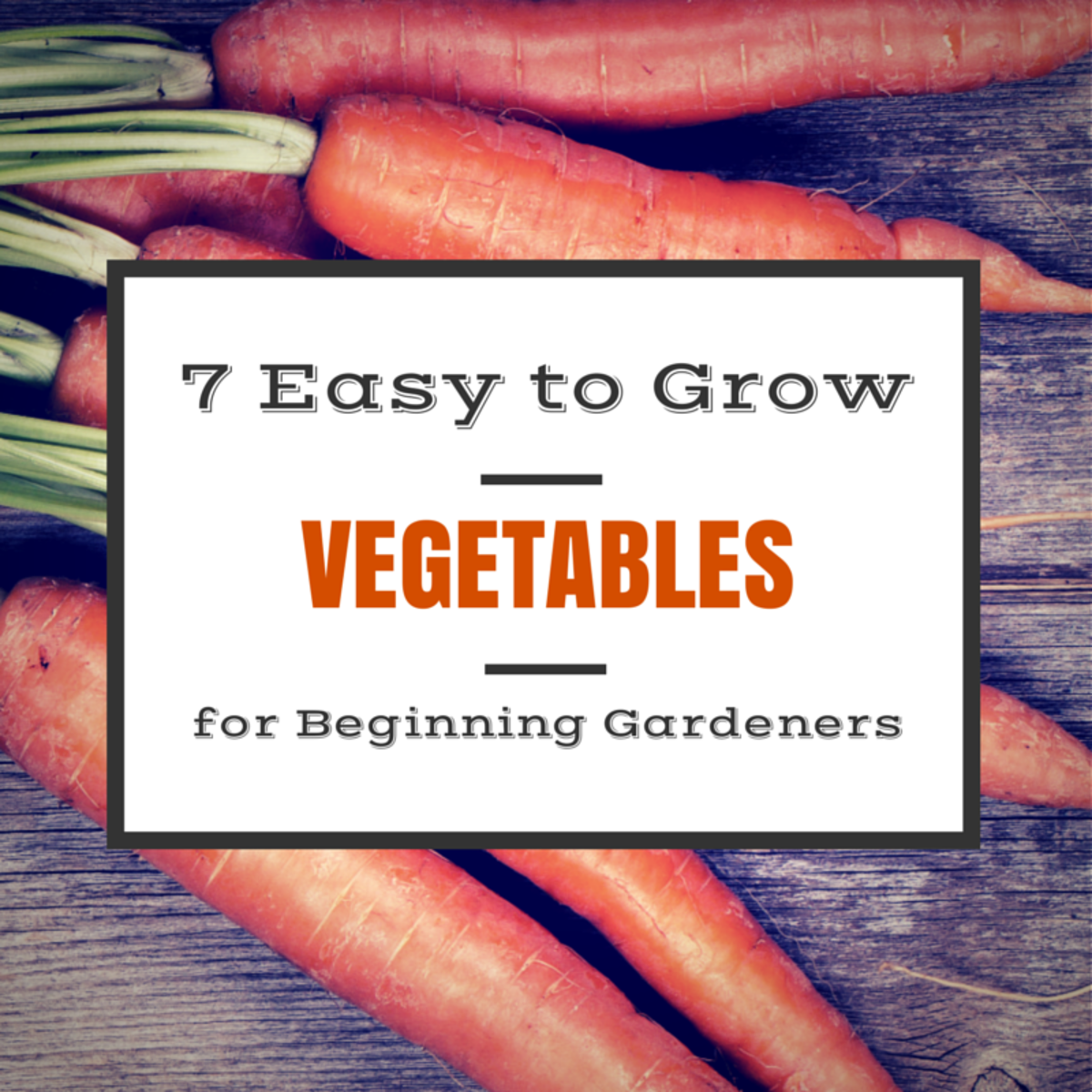 7 Easy to Grow Vegetables for Gardening Beginners