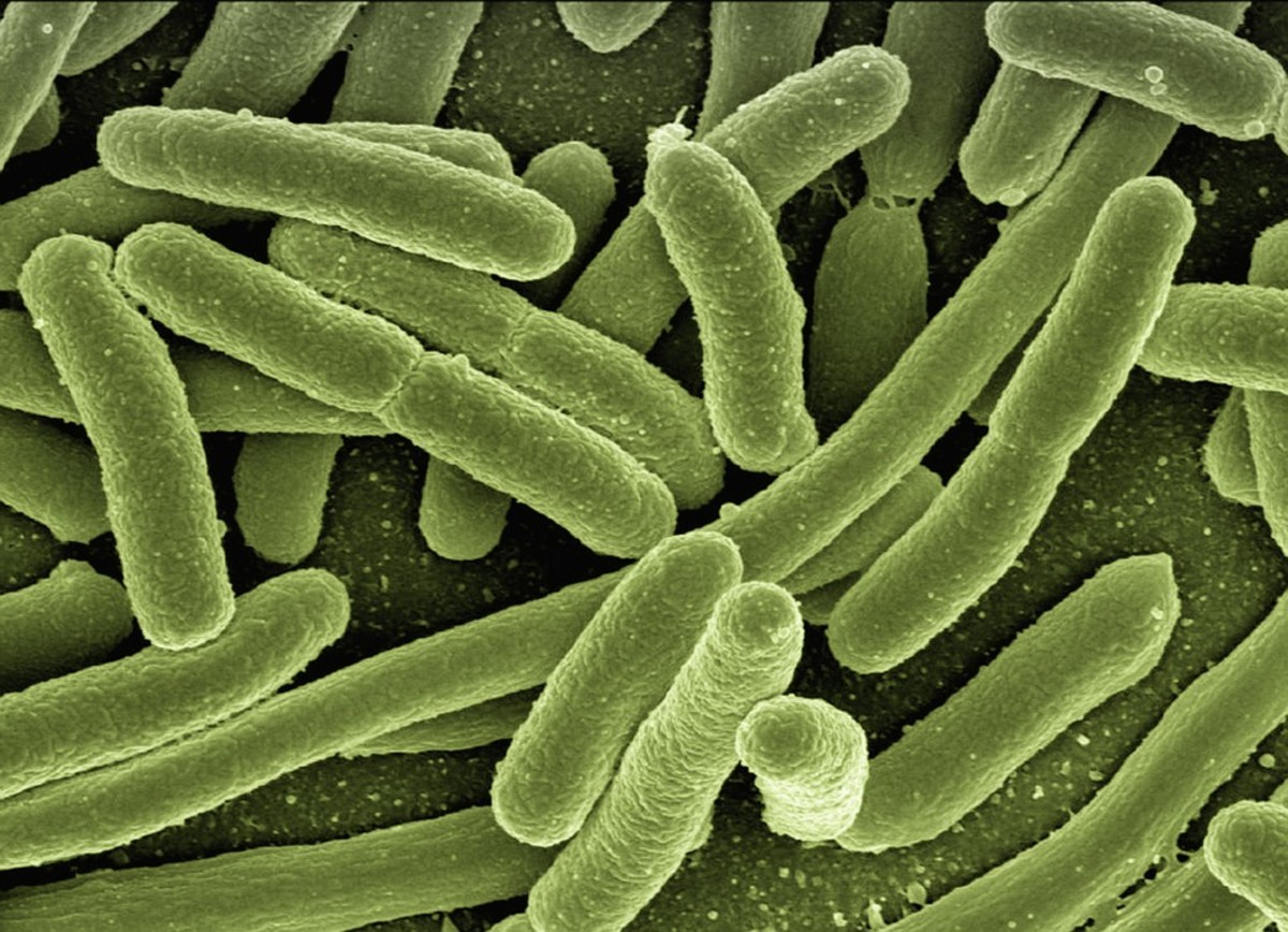 There can be a small amount of bacteria present in grey water.