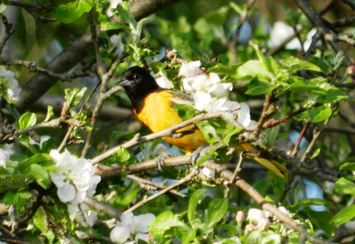 With the right vegetation you can attract birds that would never come to your feeder.