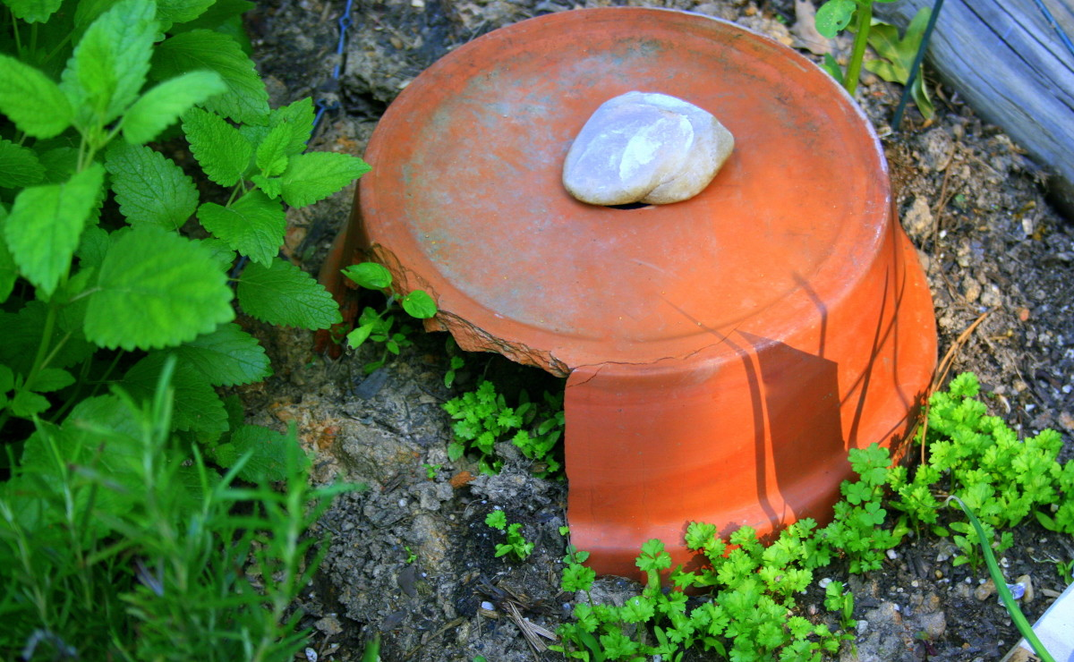 in-praise-of-clay-pots