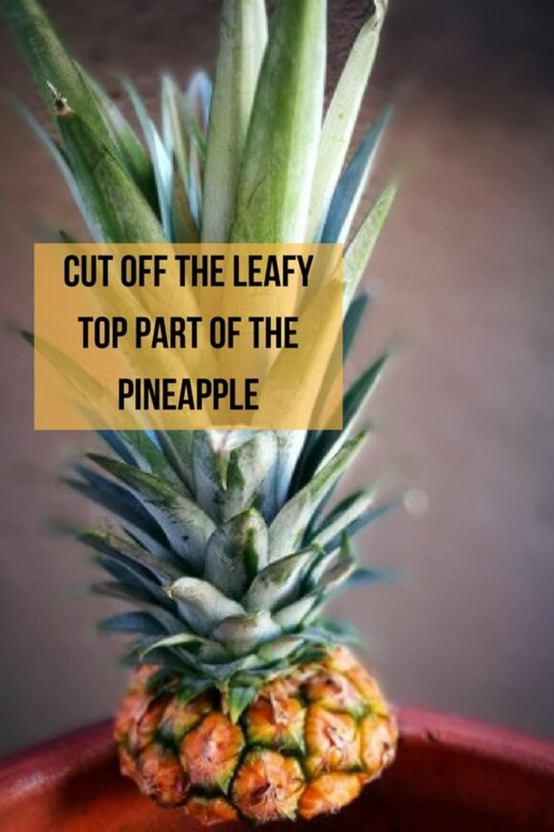 How to plant grow pineapple top in 4 easy steps with for Plant pineapple top