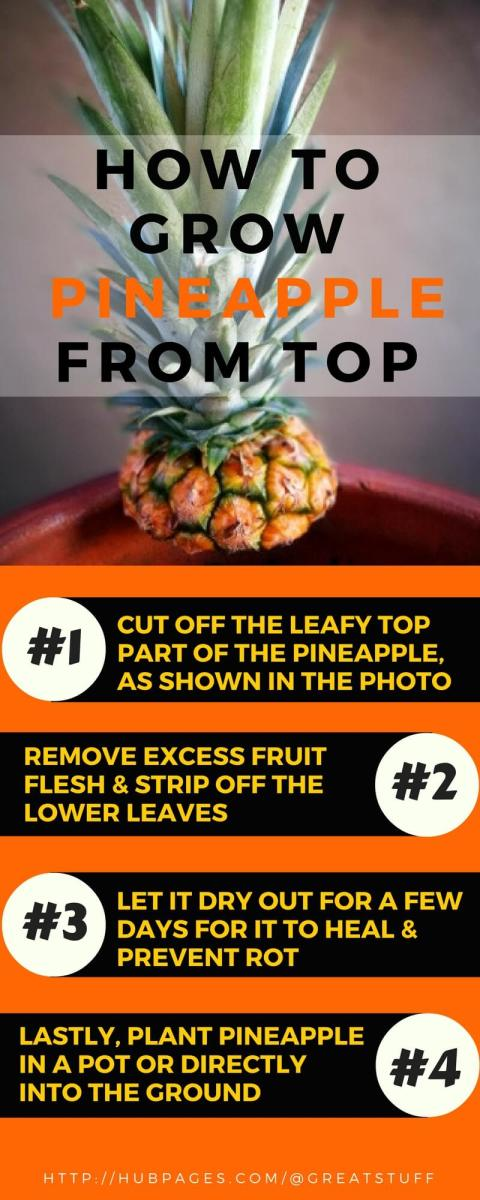 how to start a pineapple plant from the top