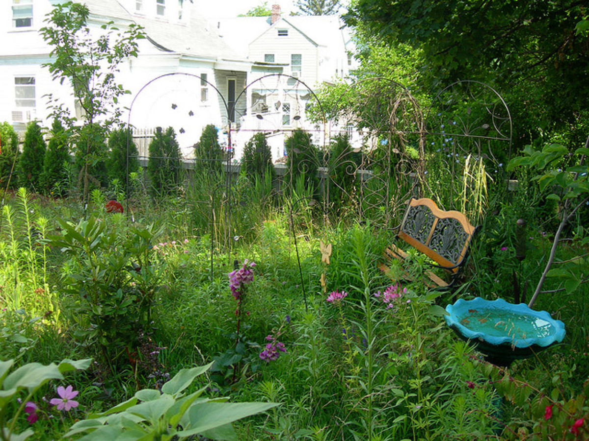 Provide food, cover, and nesting areas in you yard.