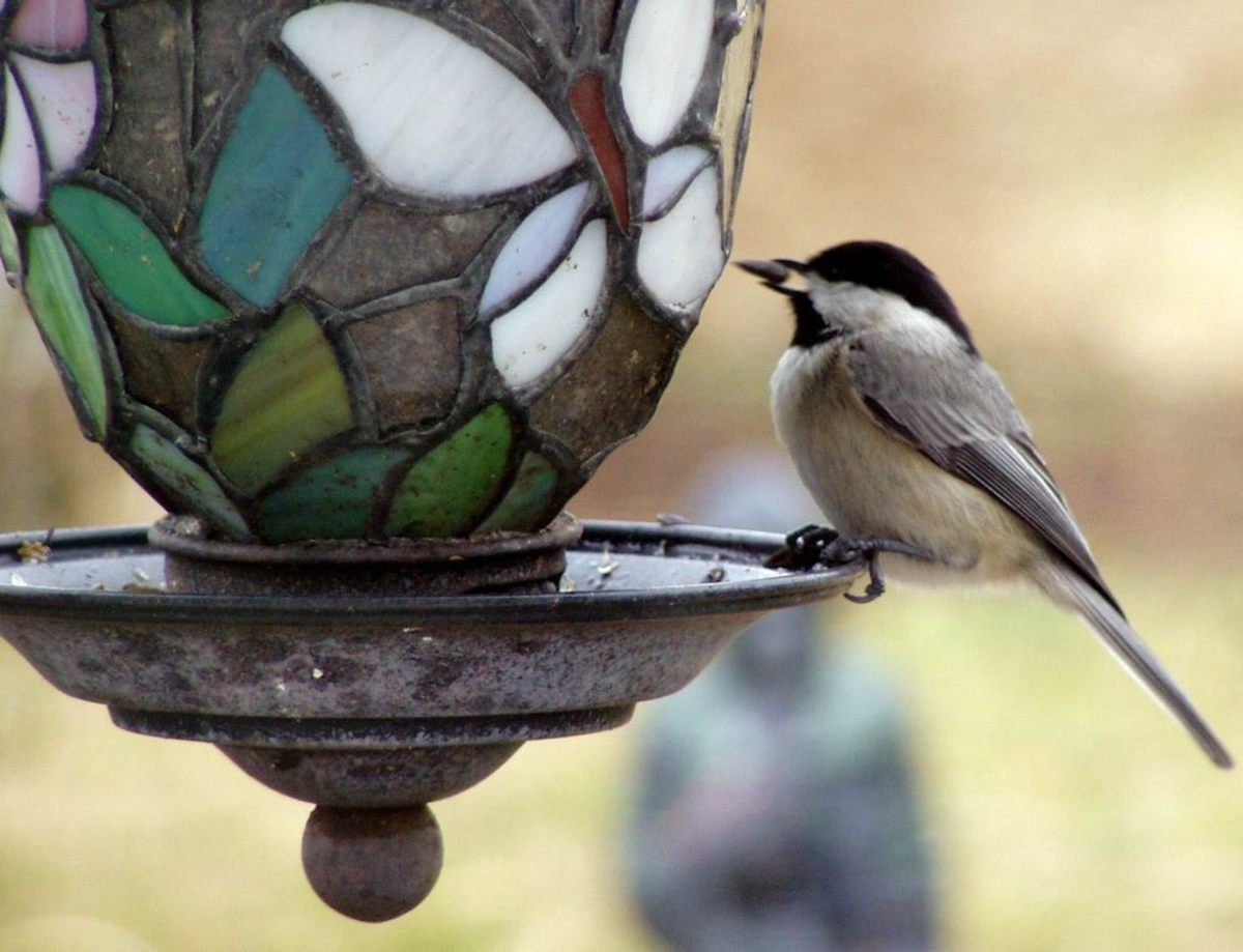 Birdbaths and Feeders Bring the Garden Alive