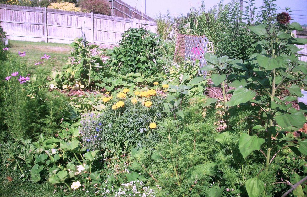 My first sheet-mulched garden