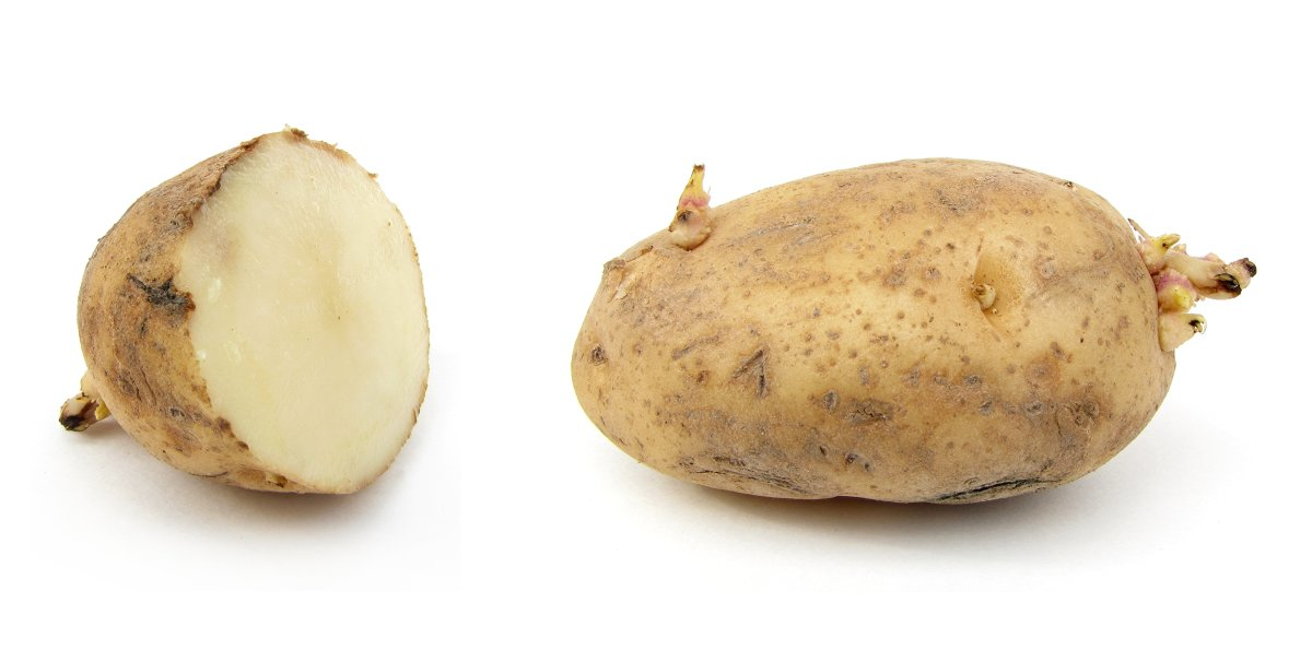 How to Grow Potatoes: Easy Potato Growing Methods For All Situations