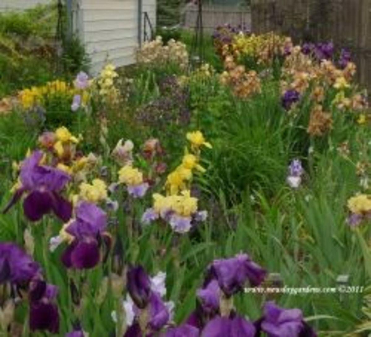 Historic Iris Preservation