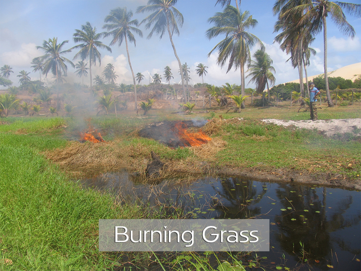 Burning Grass