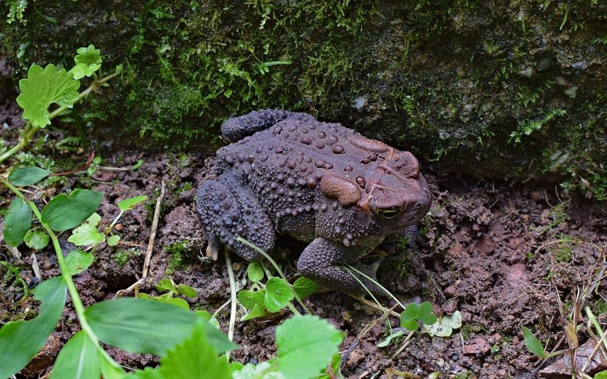 How to Attract Toads to Your Garden