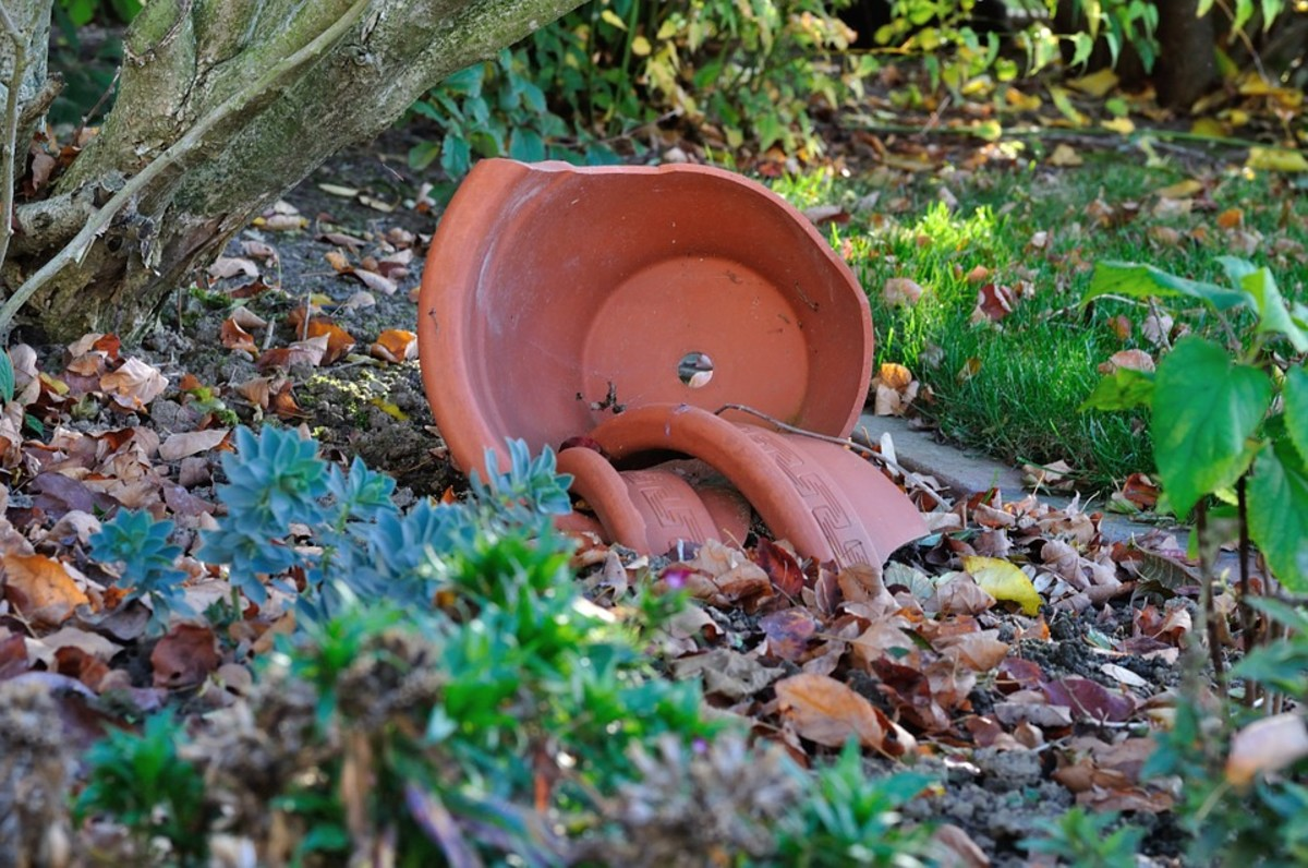 A broken flower pot can provide shelter for a toad.