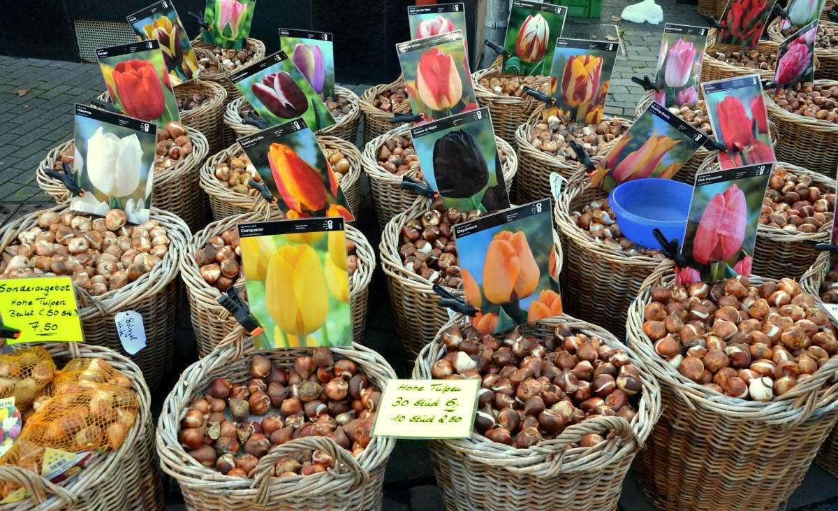 Tulip bulbs being sold at a market.