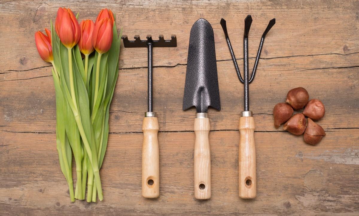 Tulip tools
