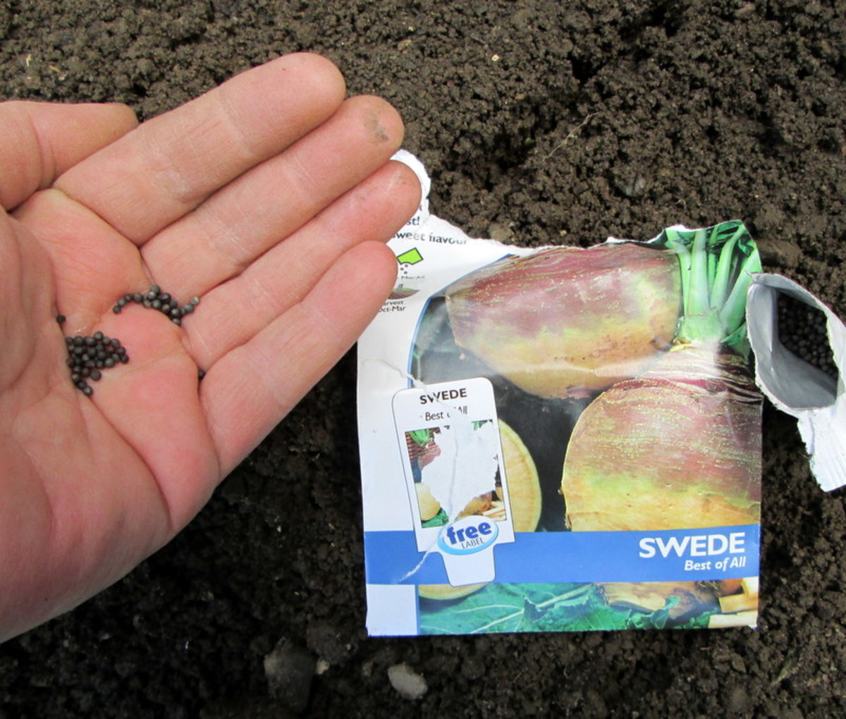 When to plant swede seeds