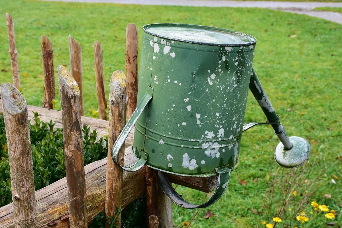 water   vegetable garden  dengarden