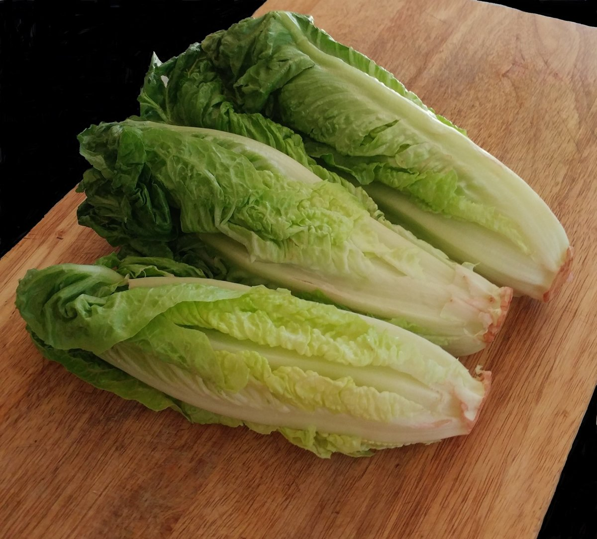 Growing Romaine Lettuce From Cuttings