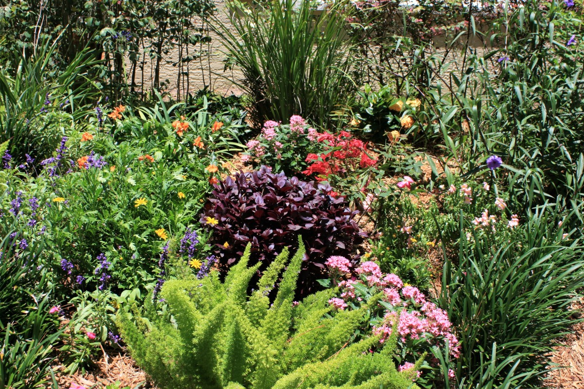 12 Plants That Thrive in the Sun: How to Make Your South Florida Flowerbed Beautiful