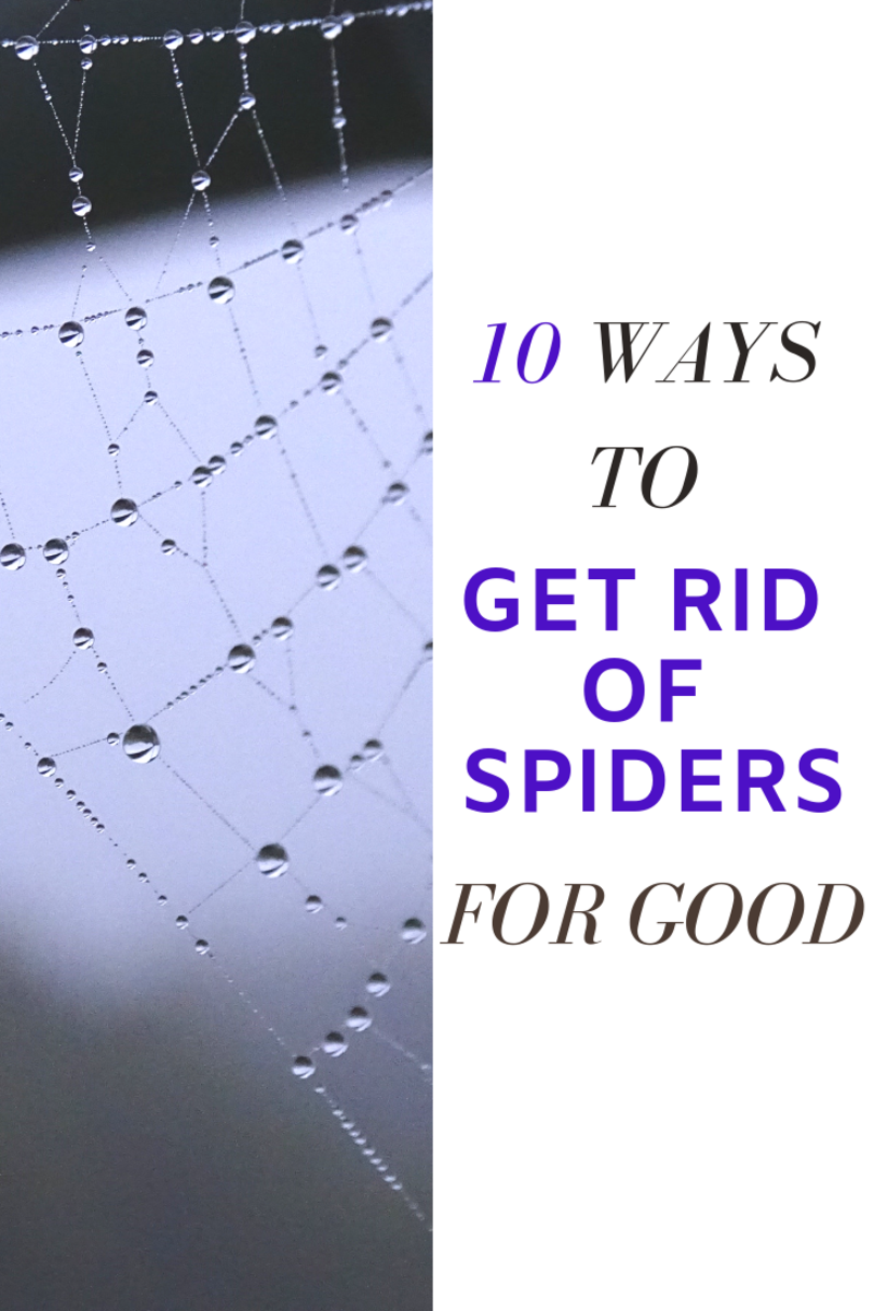 10 Guaranteed Ways to Get Rid of Spiders