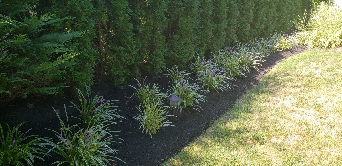 An interesting use of liriope as a border in front of a a row of shrubs that are masking a privacy fence