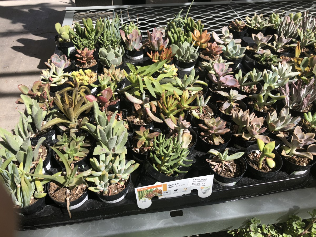 Plants at a Home Depot Garden Center.