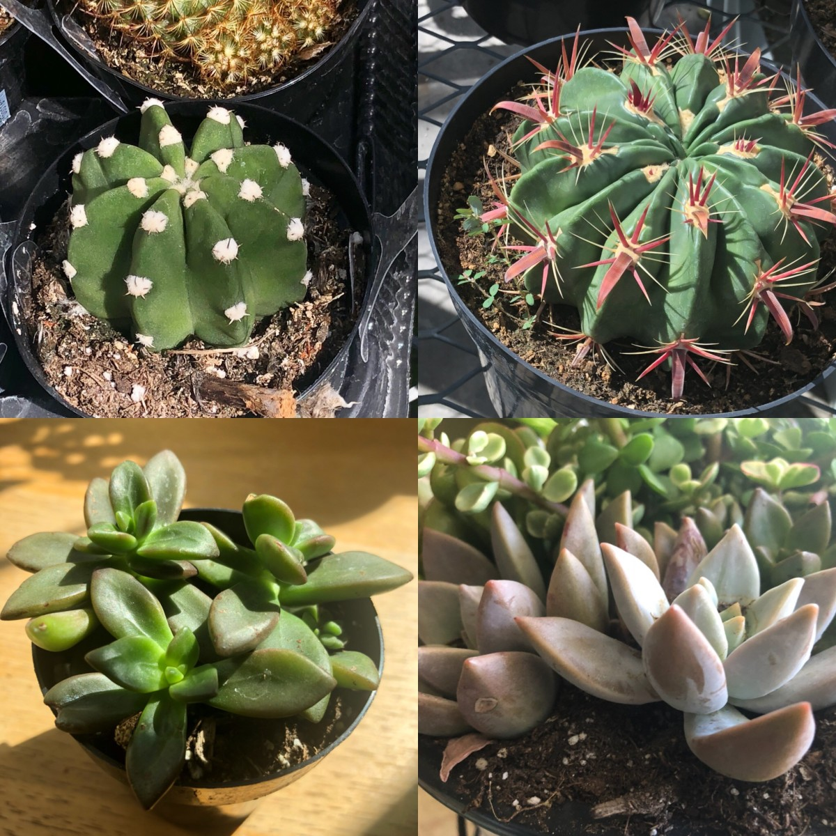 Top pictures: cacti. Bottom pictures: succulents.