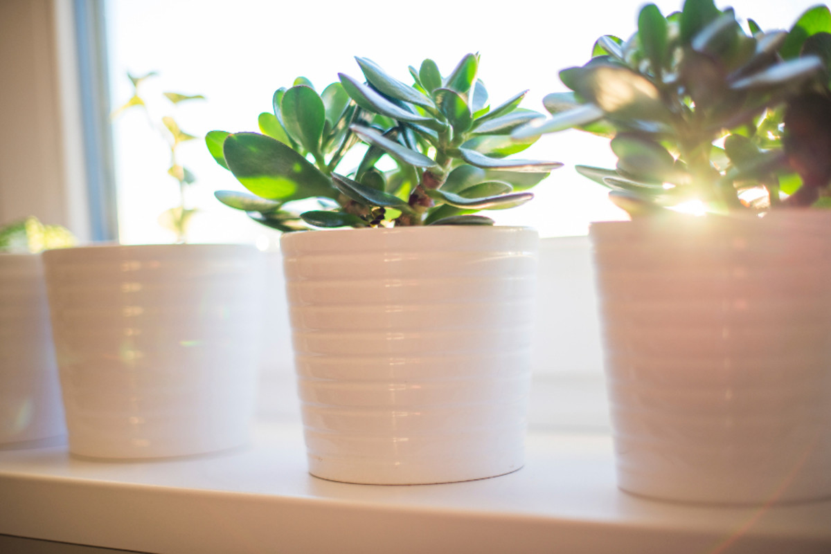 Finding the right amount of light for each plant will make them very happy.