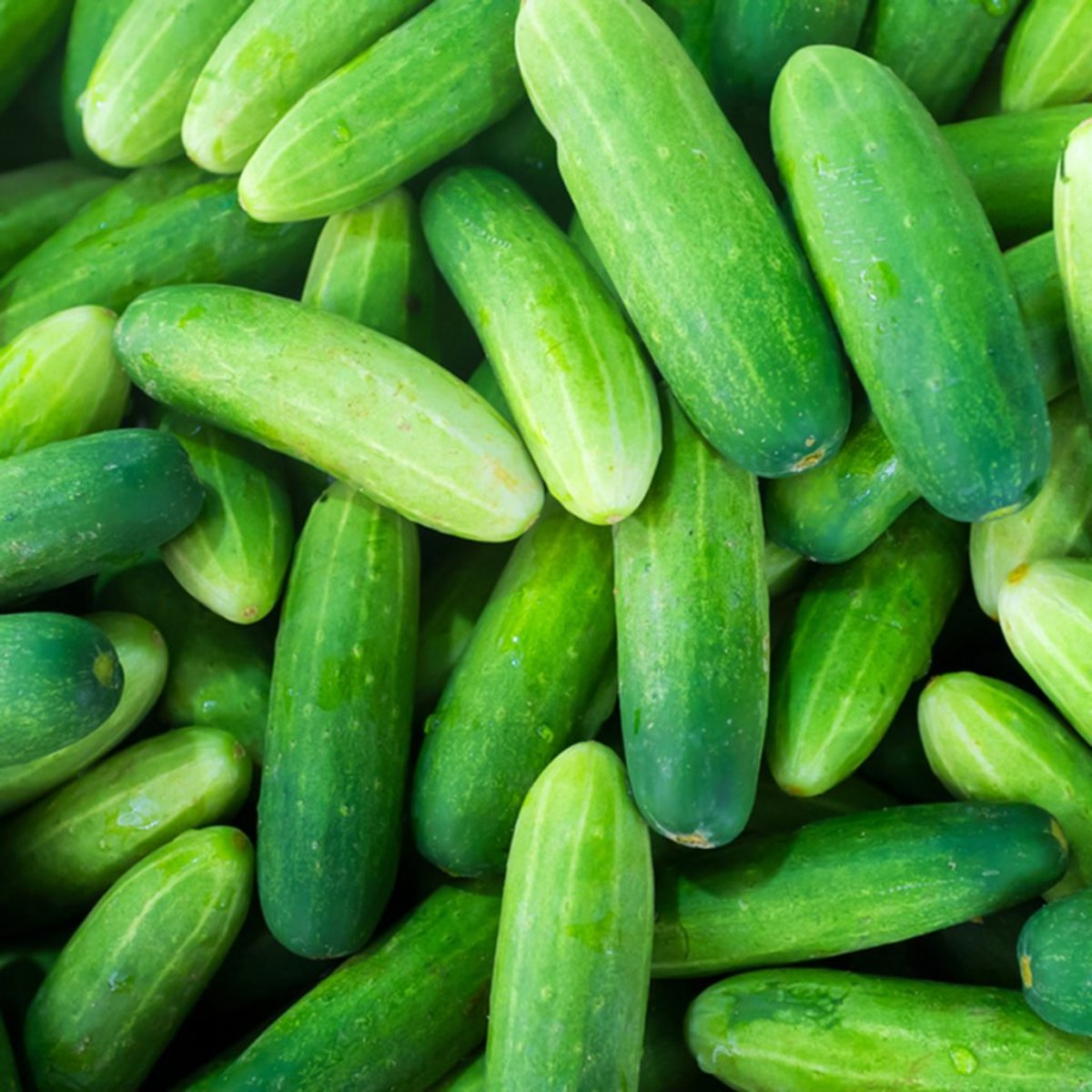 Perfect for slicing or pickling, cucumbers are known for their ease of growth and high yield.