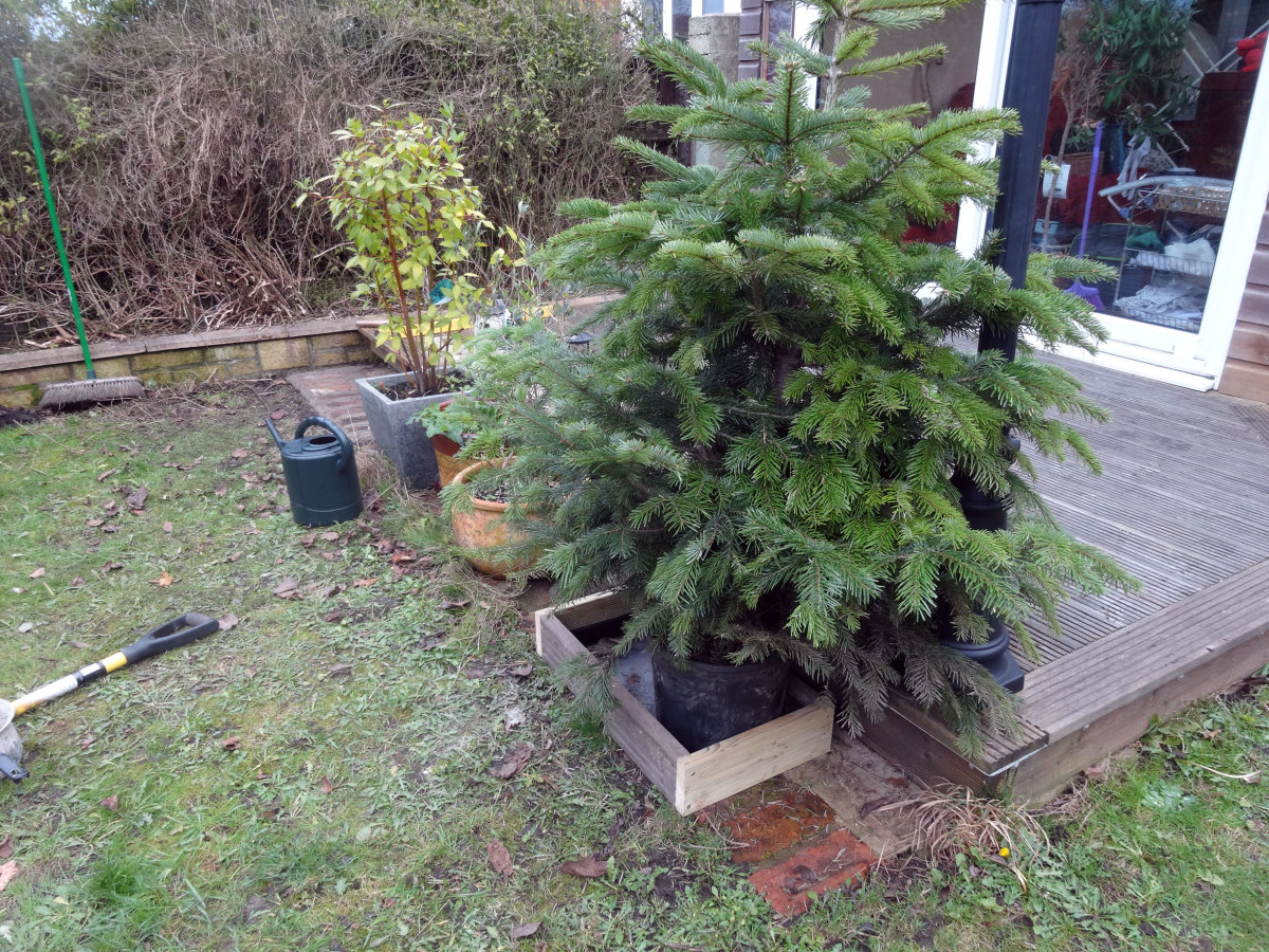 Christmas tree in front of the decking with water tray protected by a simple boxed frame, from potential damage by the lawnmower's blades.