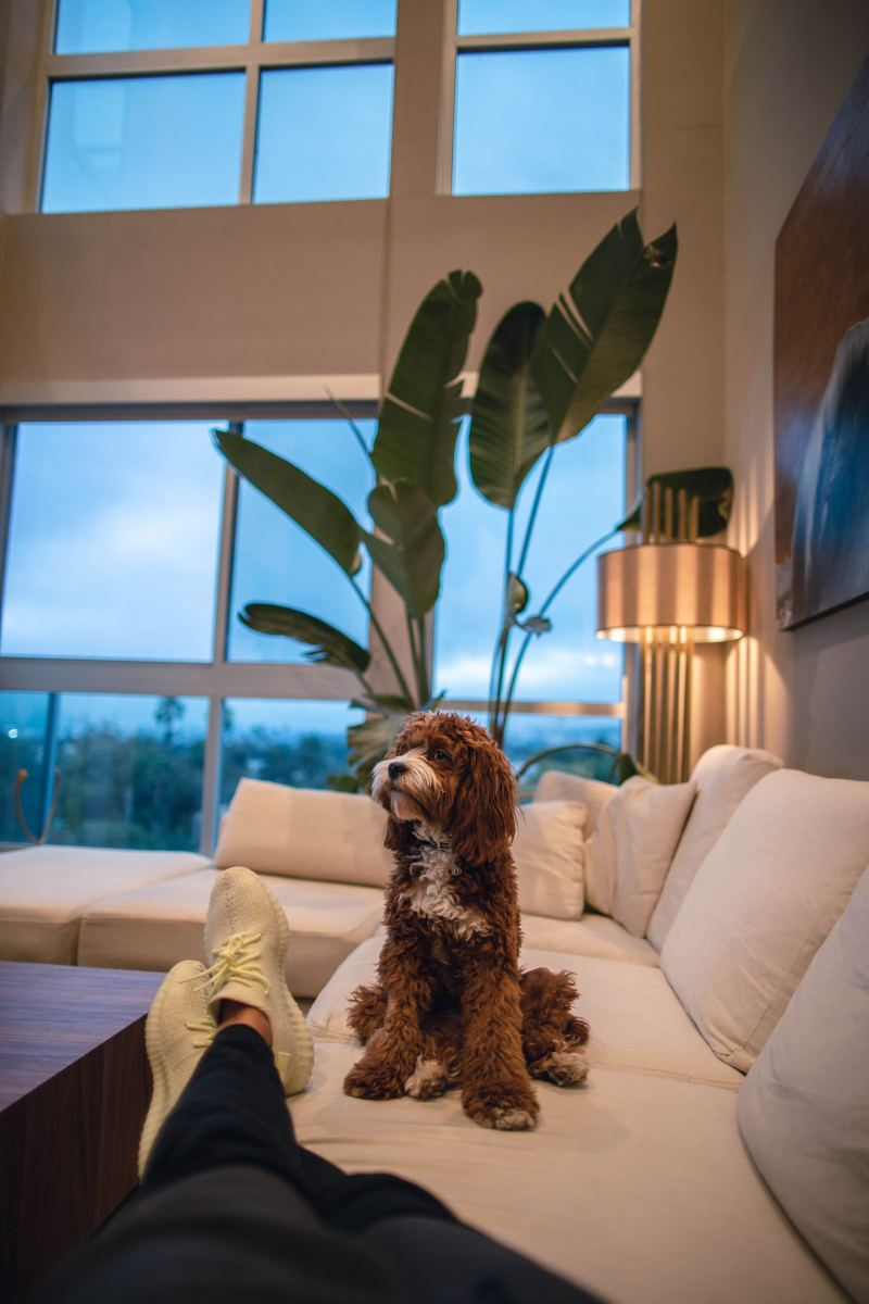 Is your furry friend stinking up your furniture? Make sure to scrub 'em up after cleaning the upholstery so they don't just re-stink everything up.