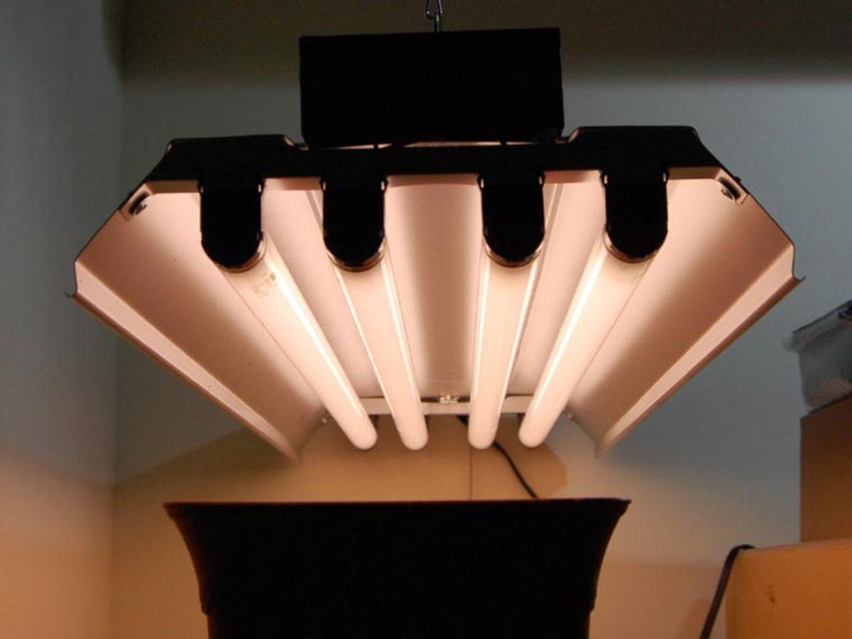 Led Vs Cfl Fluorescent Choosing Grow Lights For Indoor