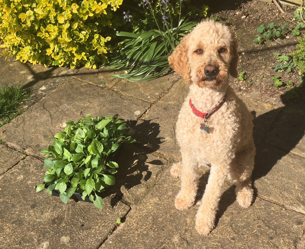 Florrie and her seedlings
