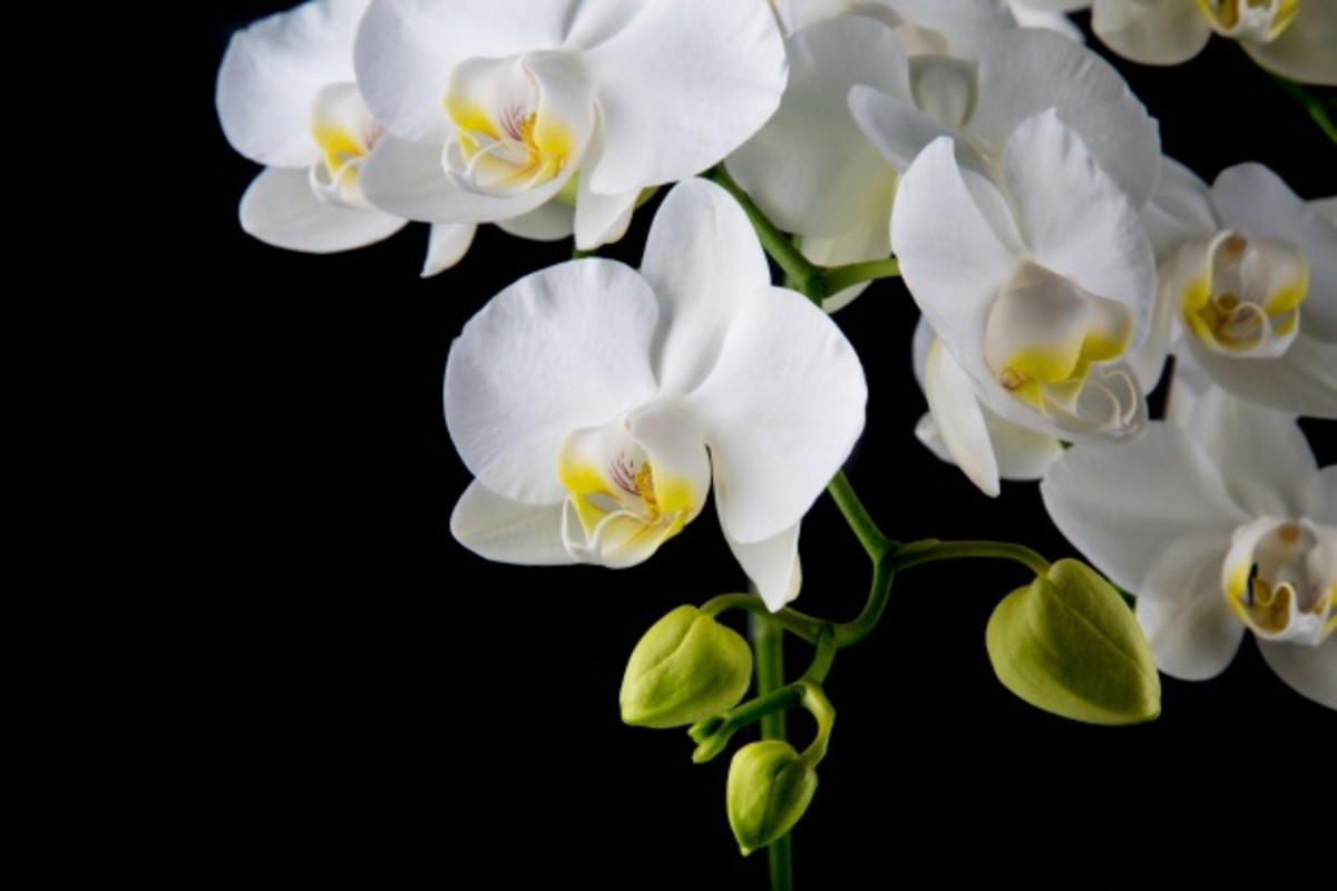 There's a lot of hyped mystery around orchids, but in reality their care is almost as easy as it gets
