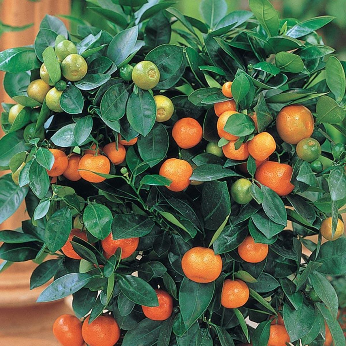 Fragrant, delicious, low-maintenance. What more could you want in a houseplant?