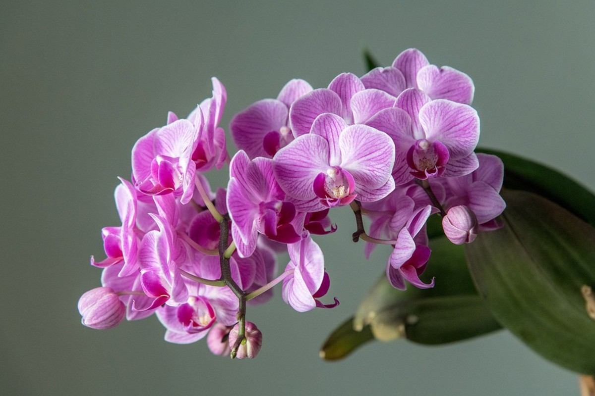 Ignore the hype and the endless obsessing. You can grow orchids with a minimum of fuss, and without decades of specialist knowledge