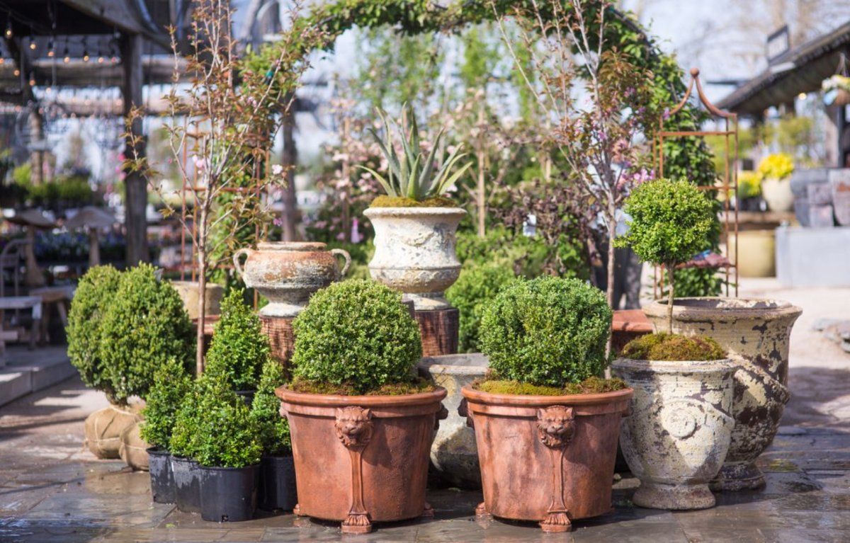 Trim your topiary at least once a month to maintain its form.