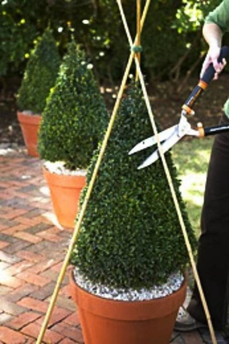 Create your own topiary shape using string, wire or wooden dowels.