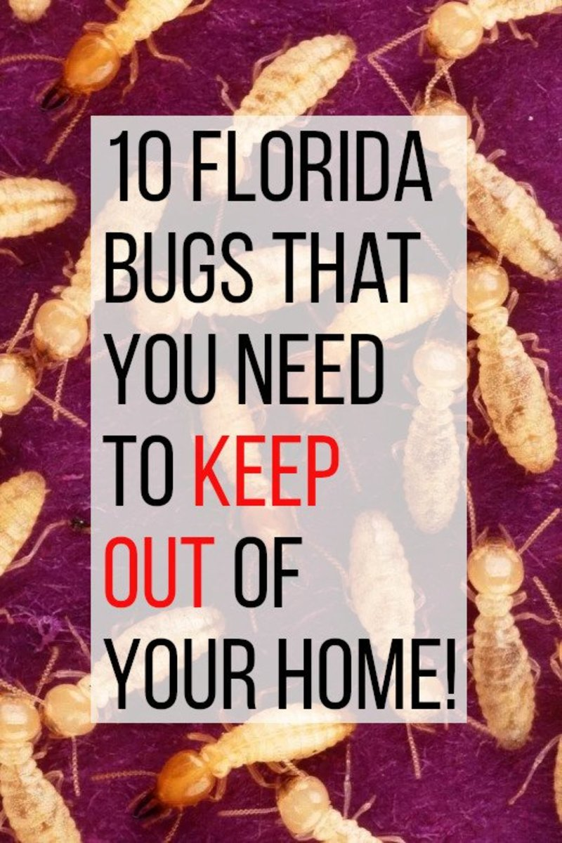 This article looks at 10 common bugs in Florida that you don't want in your home.