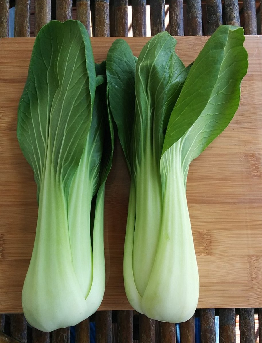 How to Grow Bok Choy (Chinese Cabbage)