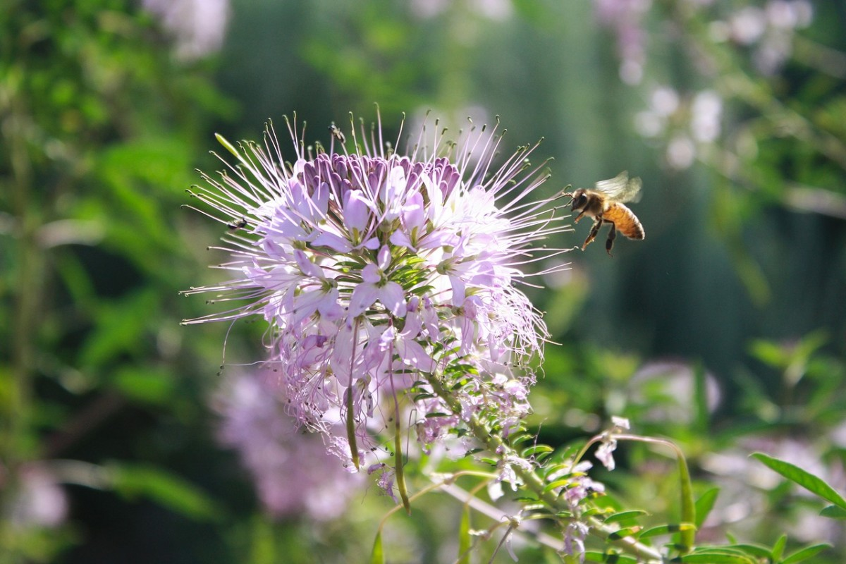 How to Grow and Harvest Bee Balm