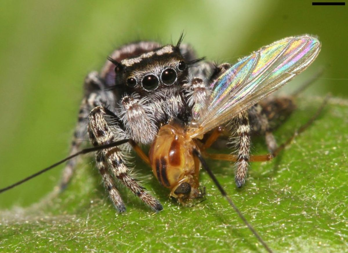 Let Spiders Help Keep Your Yard Free of Pests