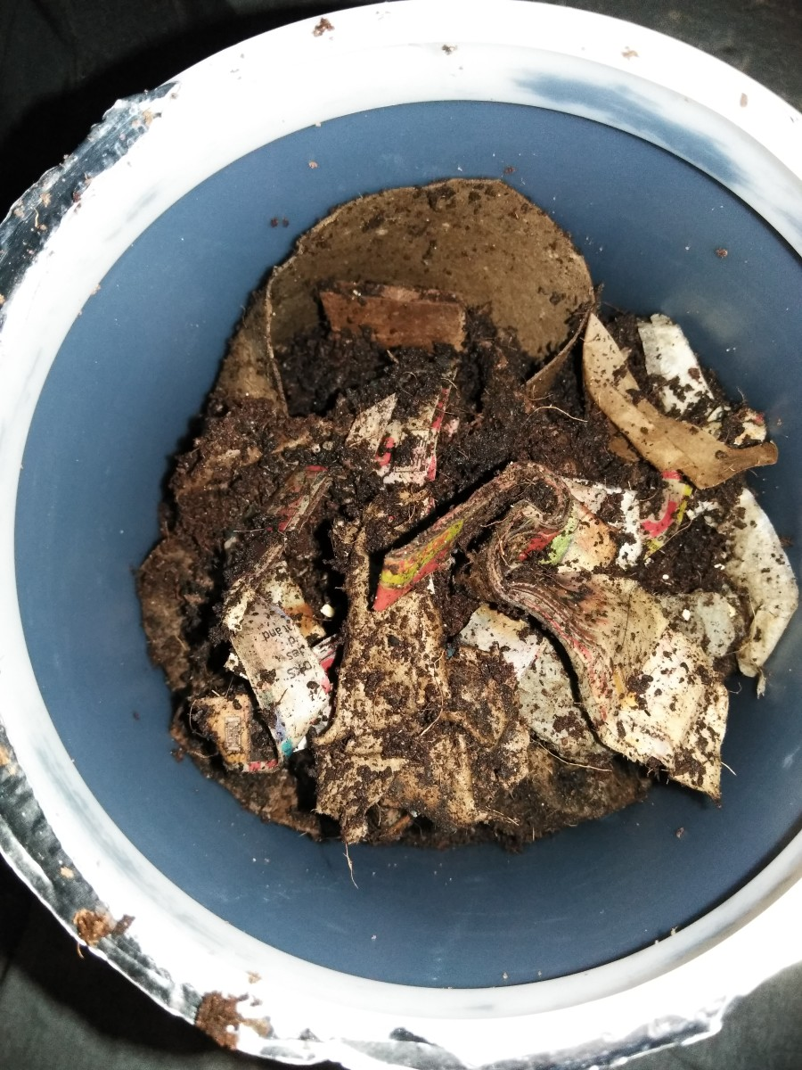 Worm bedding materials after they have been properly soaked and wrung out.
