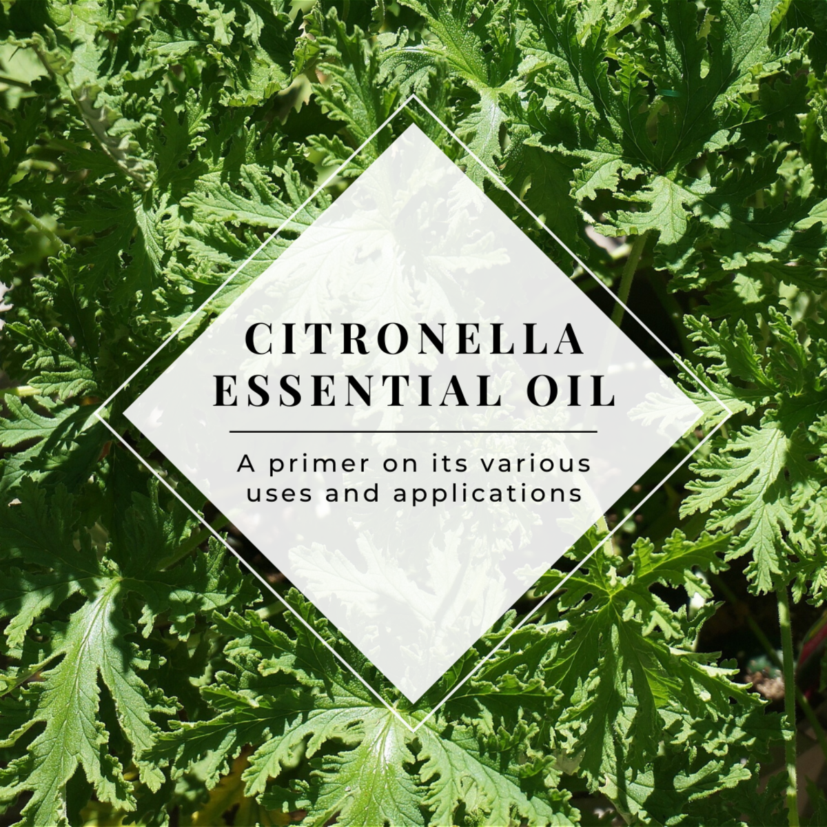 This article will break down a number of the various medicinal applications and other uses of citronella essential oil.