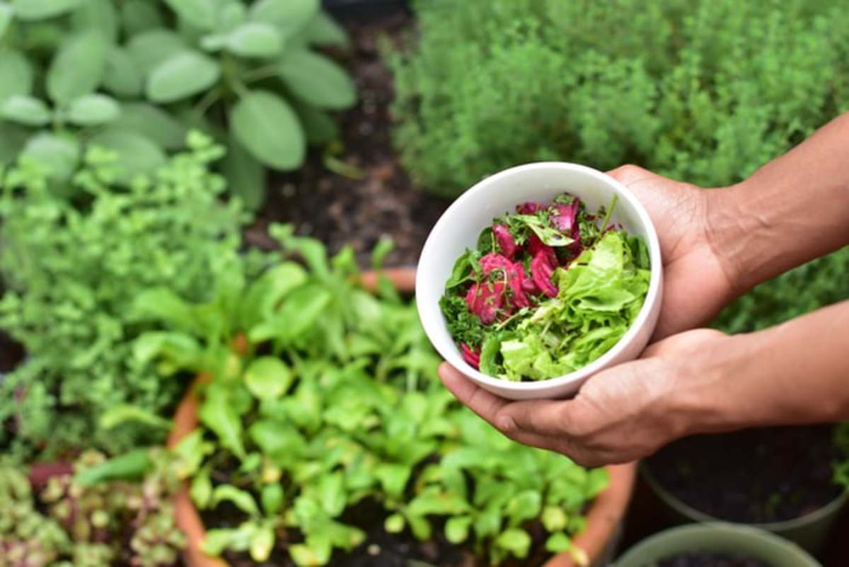 How to Maintain a Healthy Garden