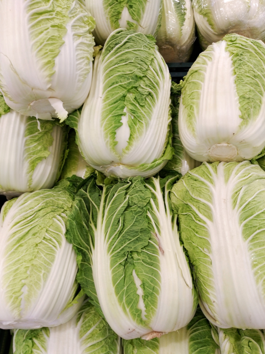 How to Grow Napa Cabbage (Chinese Cabbages)